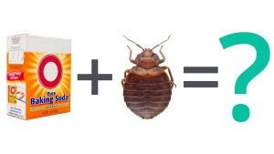 using of baking soda for bed bugs